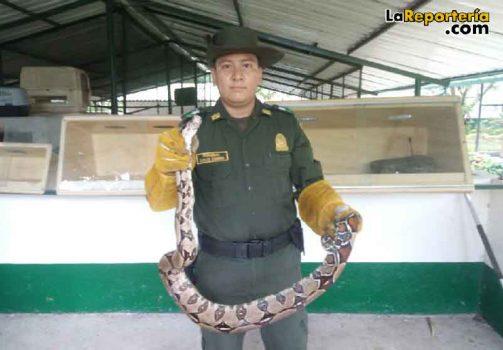 Policía Ambiental recuperó especie de fauna silvestre