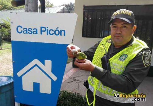 Especie rescatada por la Policía Ambiental