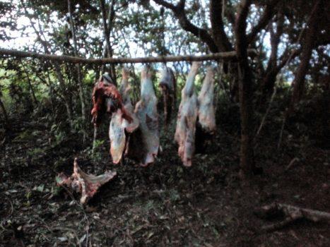 Parte del ganado fue sacrificado.