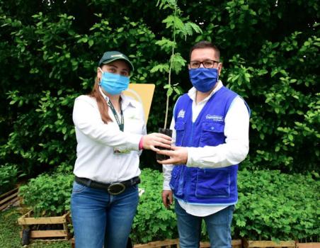 Entrega de árboles de Ecopetrol a Corporinoquia
